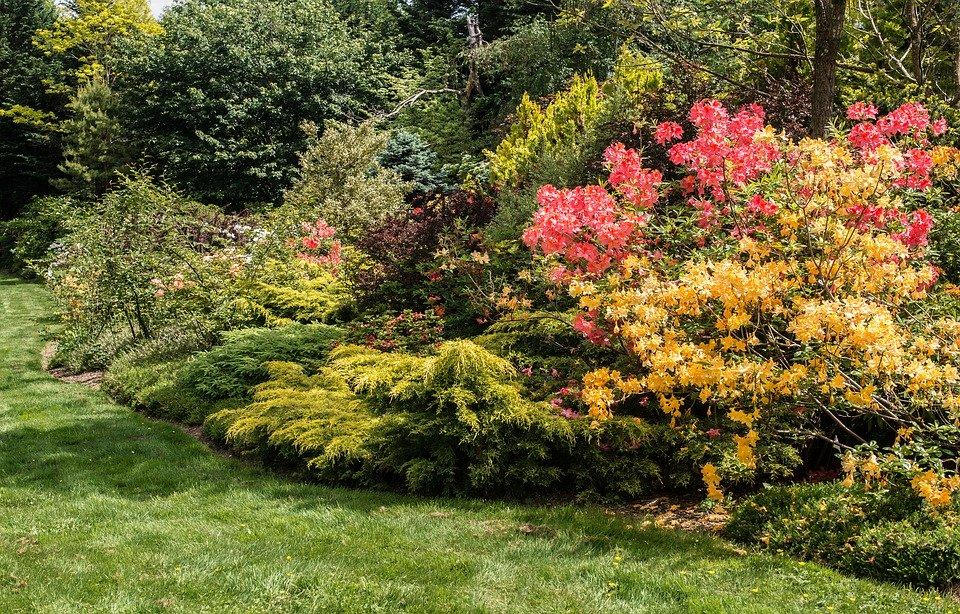 Shrubs, landscaping, asheville, sod